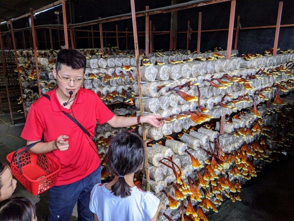 埔里豐年農場|自助採菇、導覽、手做太空包DIY 4