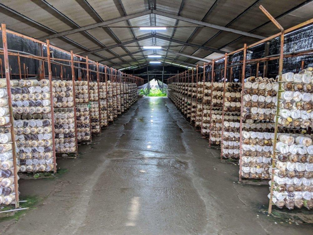 豐年靈芝菇生態農場菇棚