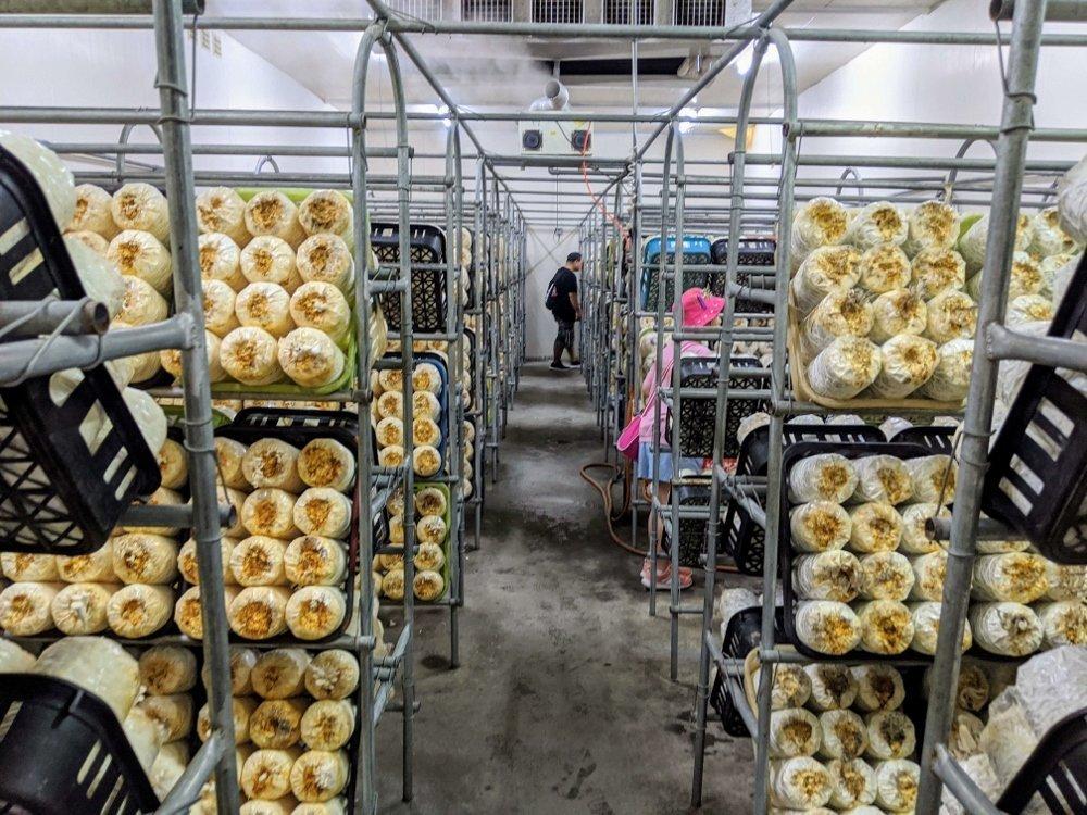 豐年靈芝菇生態農場冷藏庫