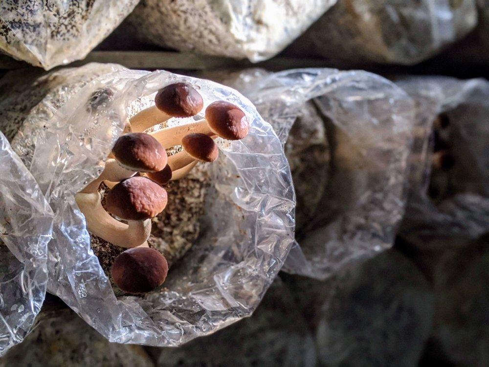 Read more about the article 埔里豐年農場|自助採菇、導覽、手做太空包DIY