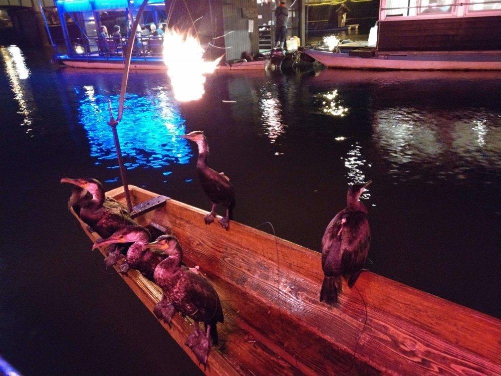小京都の湯 みくま飯店魚鷹表演