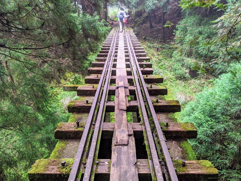 阿里山眠月線一日遊|從入山申請到路線帶你走入最美森林鐵路