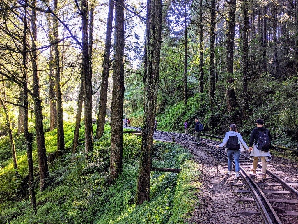 阿里山眠月線一日遊|從入山申請到路線帶你走入最美森林鐵路 1