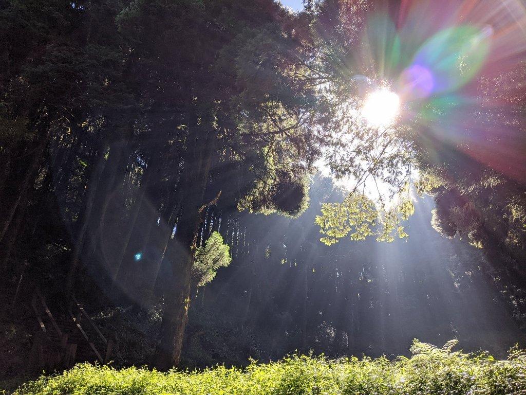 阿里山眠月線一日遊|從入山申請到路線帶你走入最美森林鐵路 2