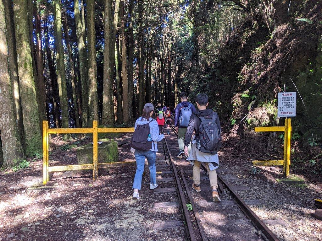 阿里山眠月線一日遊|從入山申請到路線帶你走入最美森林鐵路 4