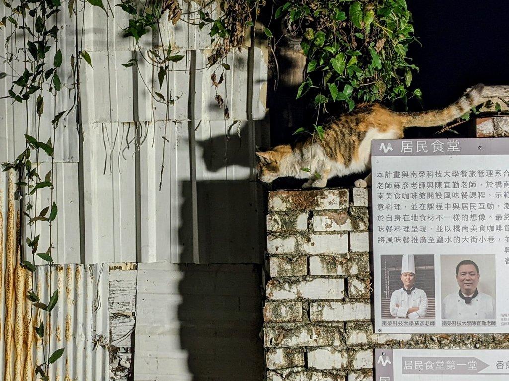 2020月之美術館 貓咪