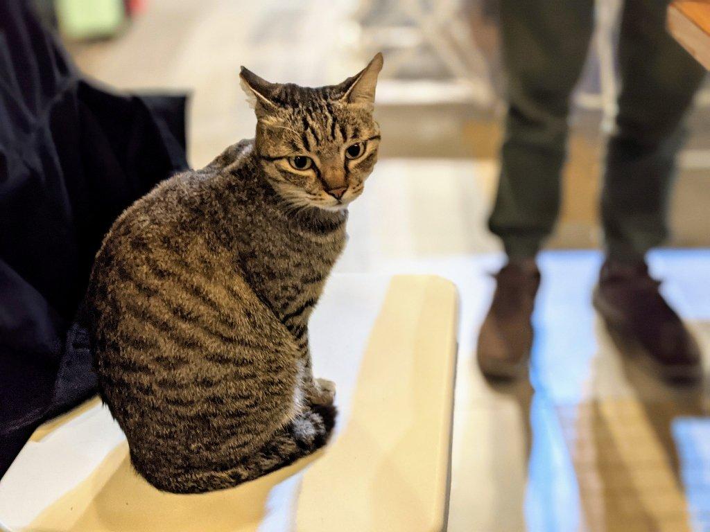 屏東夜深人靜居酒屋 佔住你座位的貓
