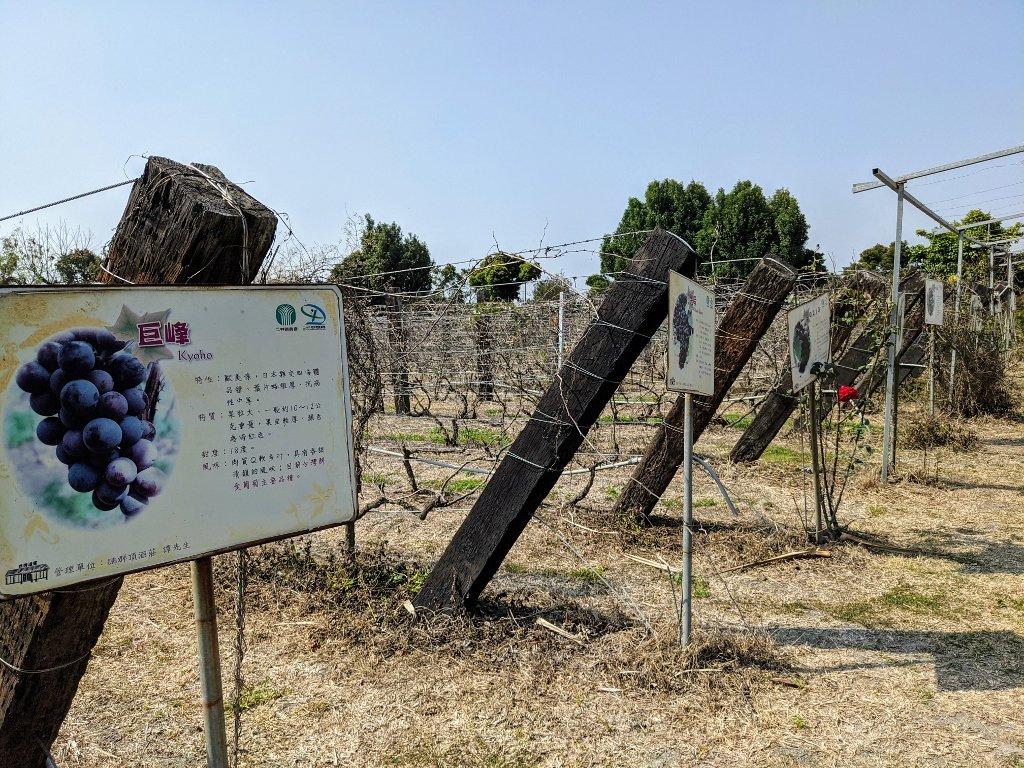 二林台灣酒窖遊客服務中心 葡萄種植示範區