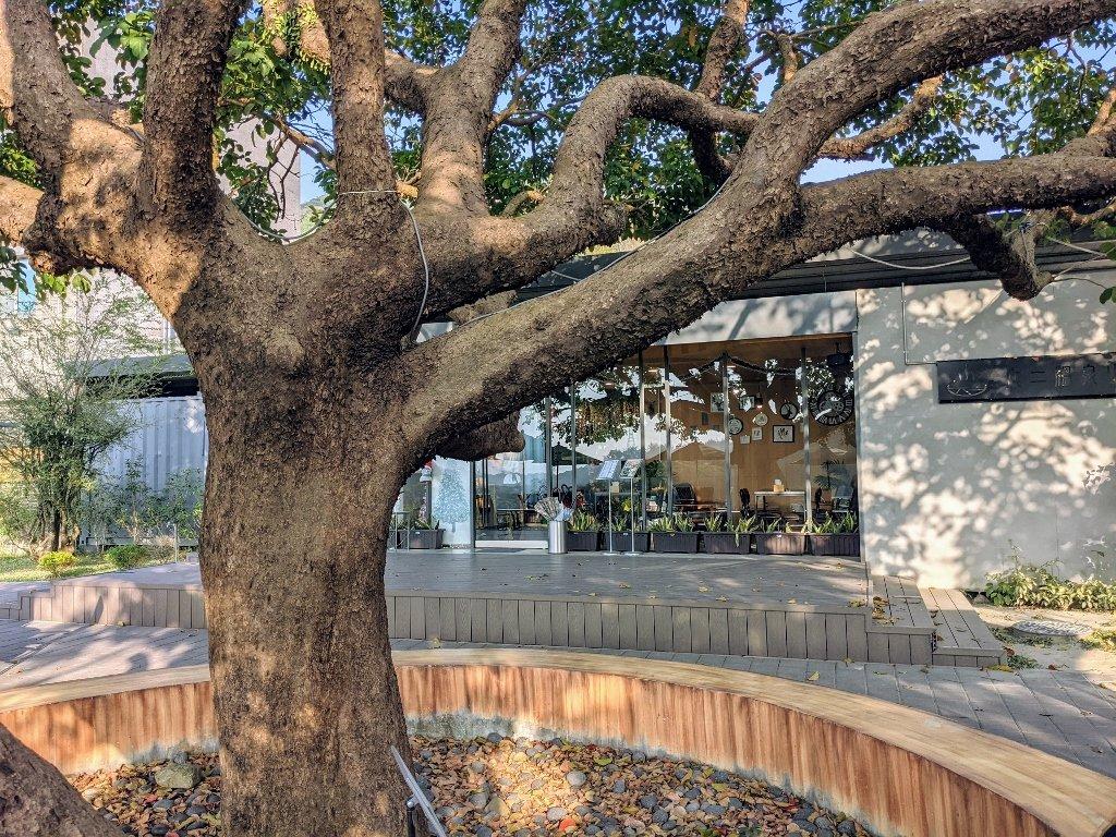 龜丹綠咖啡 茄冬樹