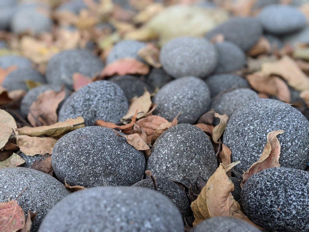 綠咖啡 茄動樹下的鵝卵石