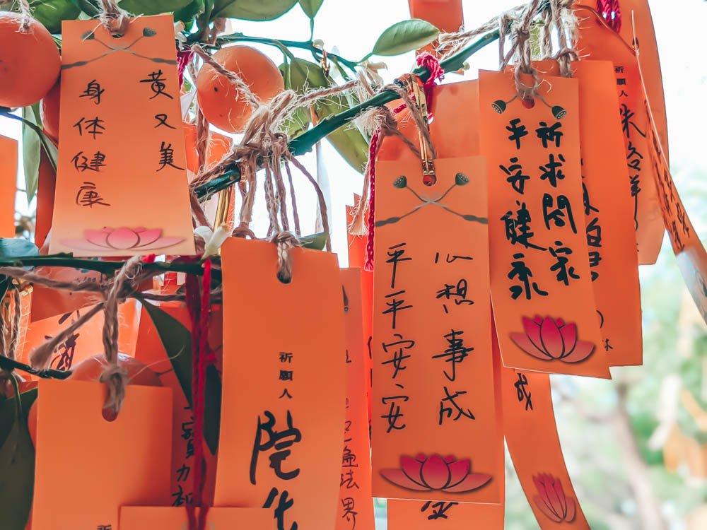 佛寺前許願樹