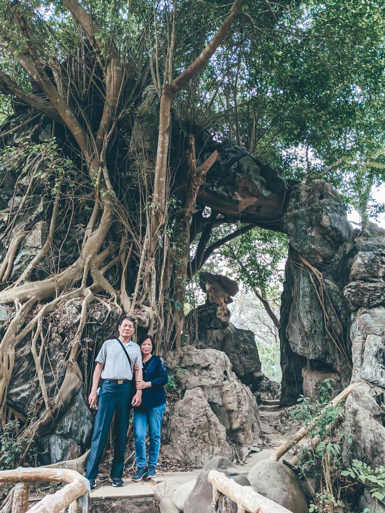 小普陀山大樹