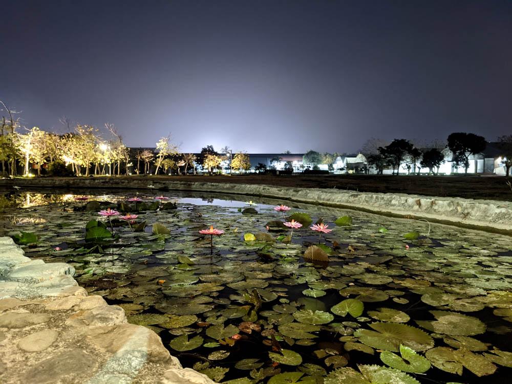 屏東縣民公園 有青蛙的水池