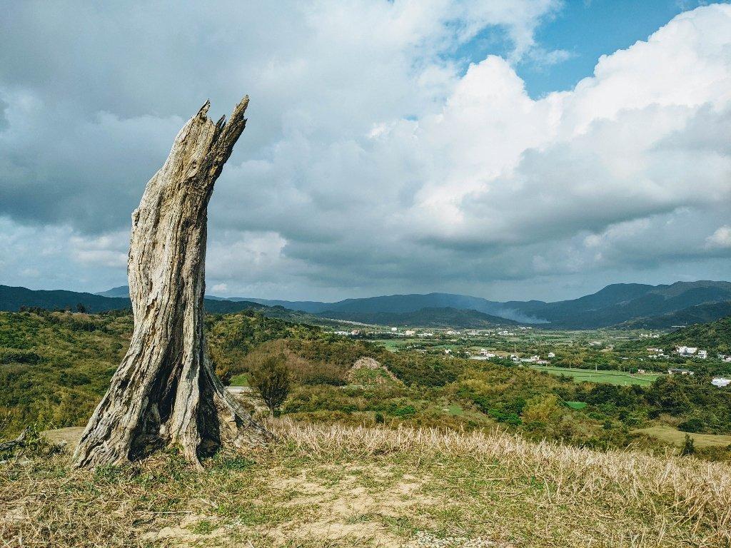 門馬羅山 夫妻樹