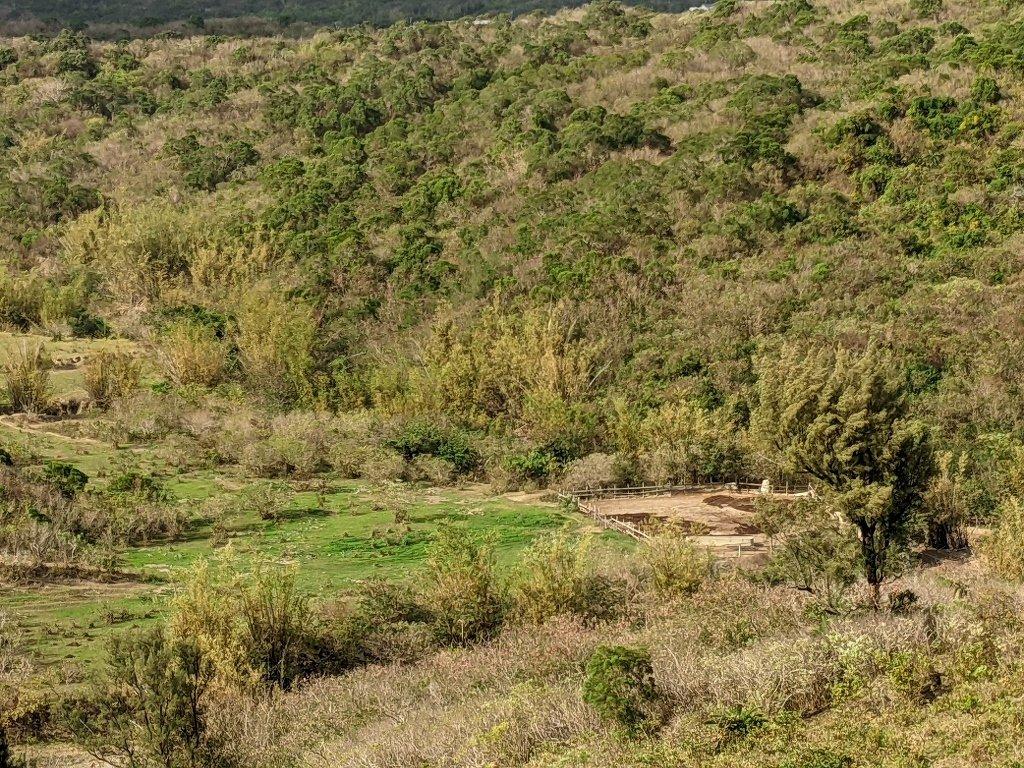 門馬羅山養牛的地方