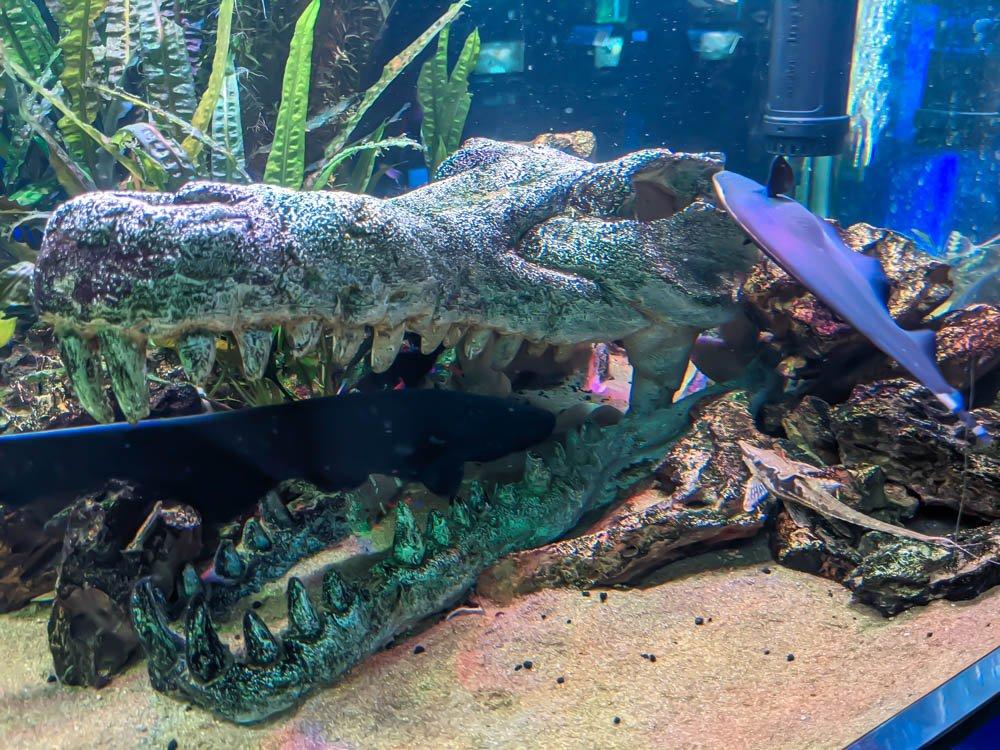農科園區觀賞水族動物展示中心 弱電魚