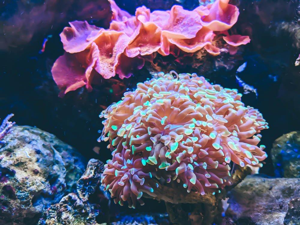農科園區觀賞水族動物展示中心 珊瑚