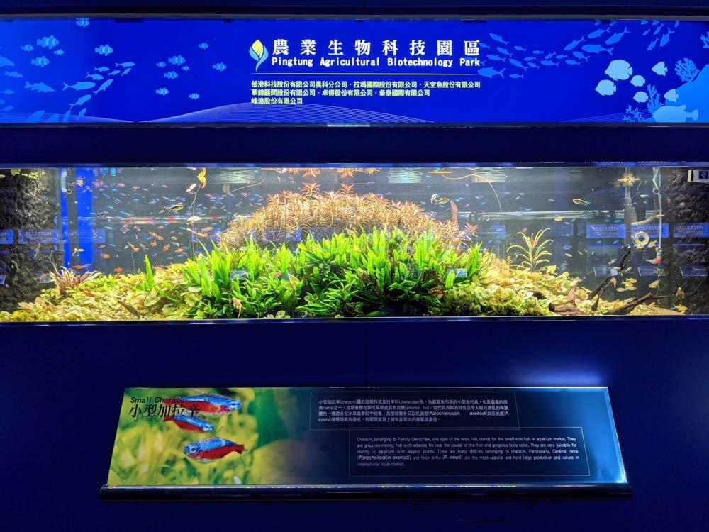 農科園區觀賞水族動物展示中心 魚缸 (1)