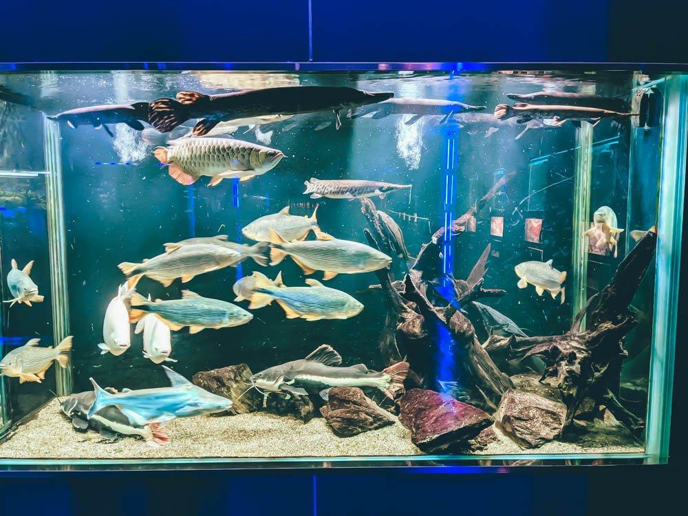 農科園區觀賞水族動物展示中心 魚缸 (3)