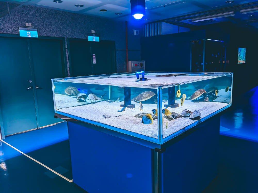 農科園區觀賞水族動物展示中心 鱟水族箱