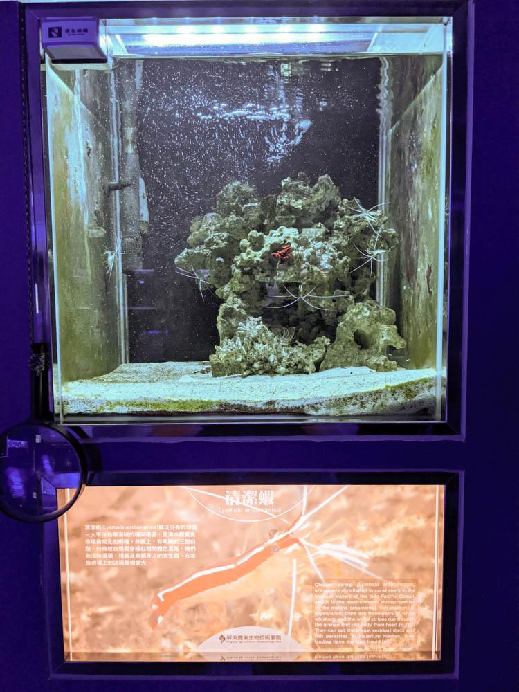 農科園區觀賞水族動物展示中心 (31)