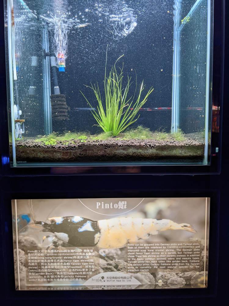 農科園區觀賞水族動物展示中心 (43)